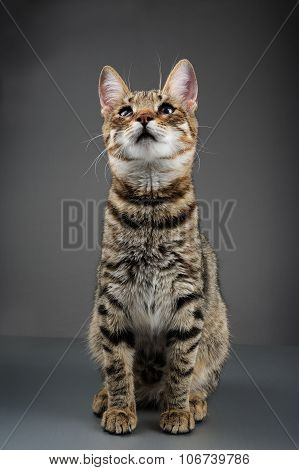 Cute Striped Tabby Kitten
