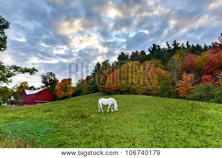 Horse Grazing In A Field