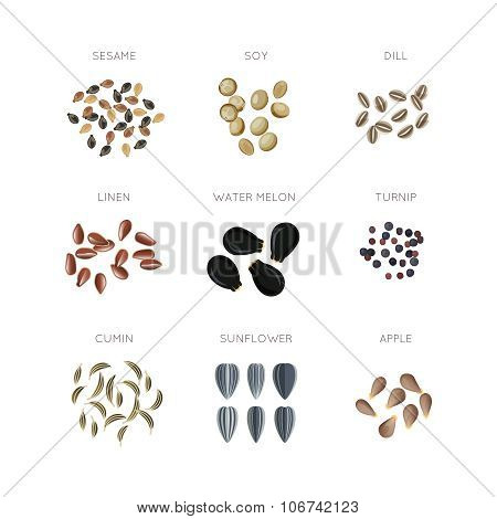Plant seed flat vector icons set