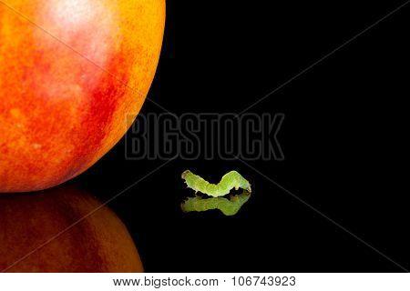 Inchworm Crawling To Peach