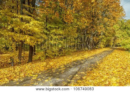Yellow Leaves Of The Trees Next To The Road