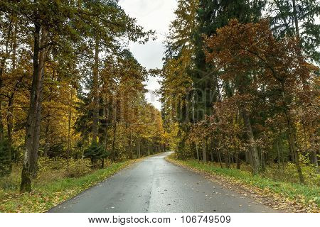 Road From Forest
