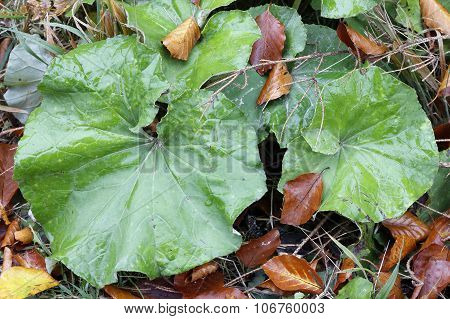 Green And Withered Leaves