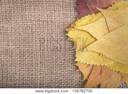 Autumn leaves on sackcloth.