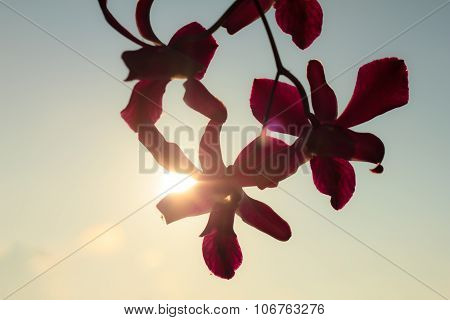 Purple Orchid In The Setting Sun