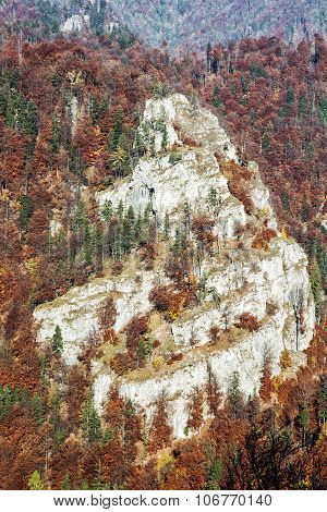 Big Rock In The Autumn Forest, Seasonal Natural Scene