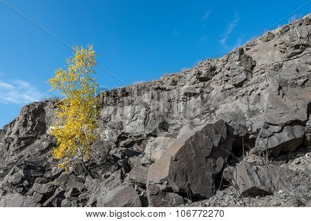 A Birch Tree In The Middle Of The Stone's