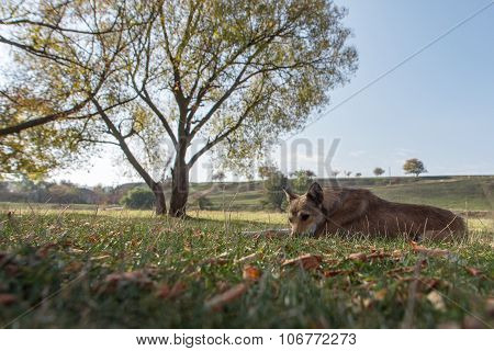 Homeless Dog Sleeping In Grass