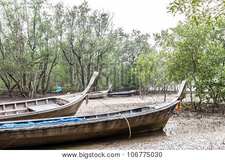 Long Tail Boat In Mangrove At Krabi, Thailand