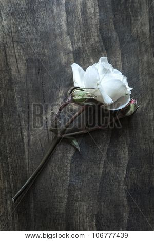 White Rose On A Rustic Old Vintage Table