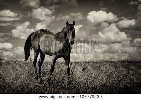 Country Field And Horse