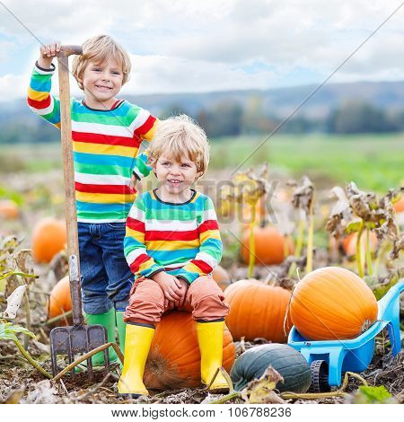 Two Little Kids Boys Sitting On Big Pumpkins On Patch