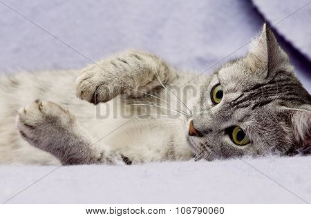 Grey cat lying on bed with close eyes in nice blur warm background, kitten, cat at home, portrait of
