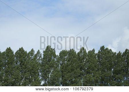 Tree Line And Sky