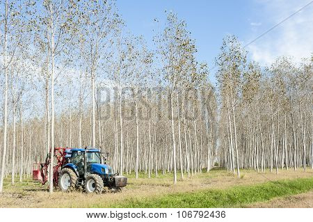 Poplar Grove And Tractor