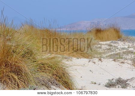 Sand dunes by the sea