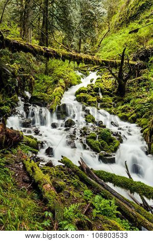 Cascade Waterfalls In Oregon Forest Hike Trail