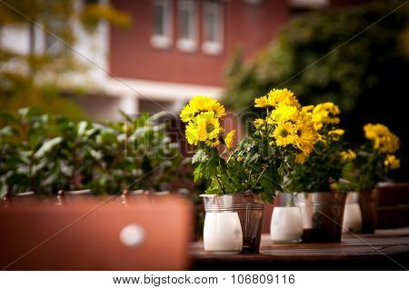 Small sunflowers in metal pails