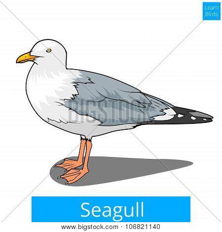 Seagull learn birds educational game vector