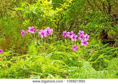 Typical Flowers On Madeira - Tropical Landscape