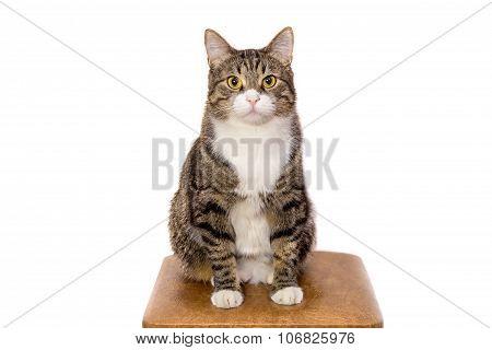 Cat Sitting On Stool