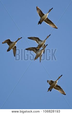 Flock Of Ducks Flying In A Blue Sky