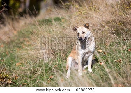 Small stray dog in grass