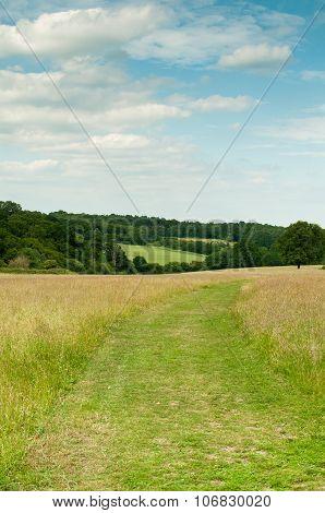 Pathway through a sunny meadow