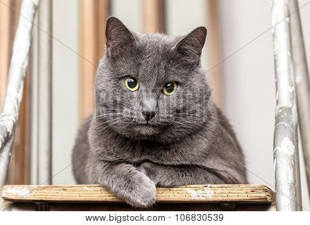 Grey Cat On Stepladder