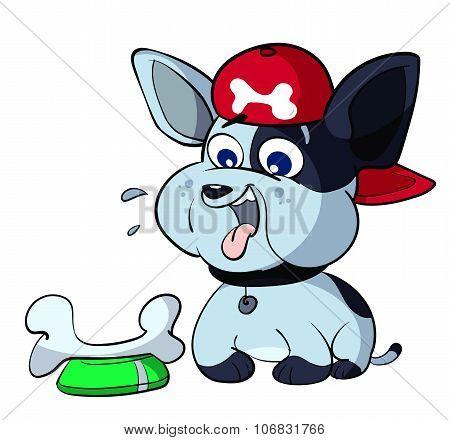 cute puppy bulldog eating