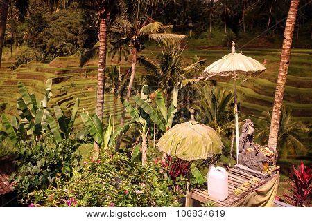 Asia Indonesia Bali Rice Terrace Ubud Tegallalang