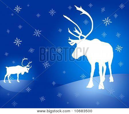 Two Caribou Reindeer Christmas Card