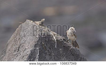 Strange Bedfellows On A Rock