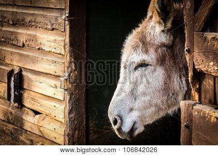 Donkey in a barn