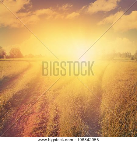 Summer landscape and dramatic sunset.