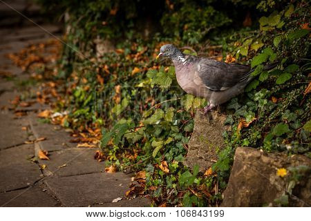Pigeon in a park