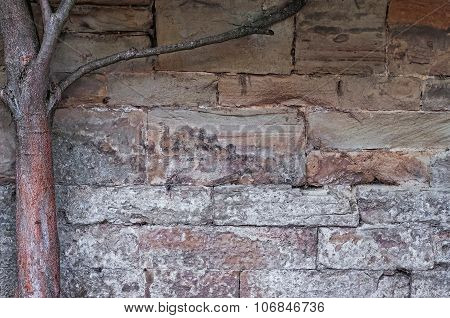 Limestone medieval wall of stone blocks texture background surface tree branch on the left side
