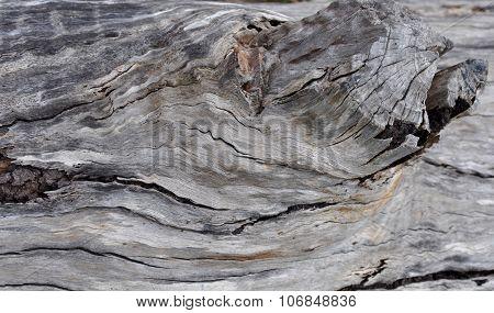 Tree Bark Texture: Simple