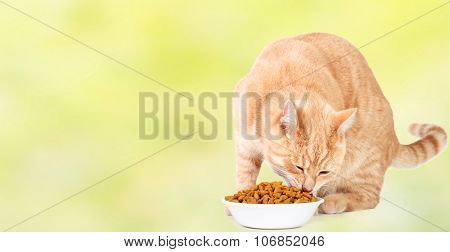 Ginger tabby cat eating food over blue background.