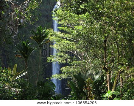 Akaka waterfalls in Hawaii in the USA