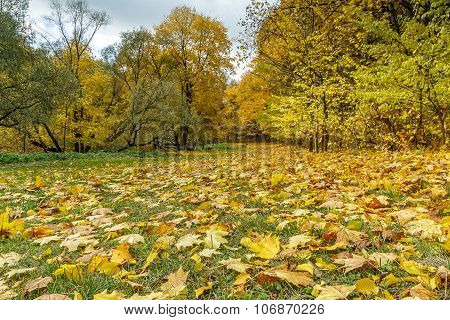 Yellow And Beautiful Forest