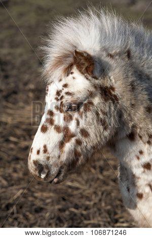 Dotty Pony