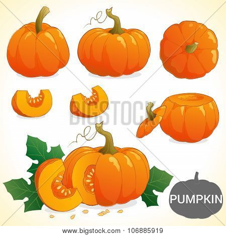 Set Of Pumpkin Patch In Various Styles Vector Format