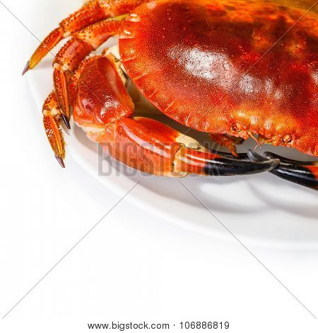 Tasty prepared crab on the plate isolated on white background, food still life border, delicious healthy nutrition