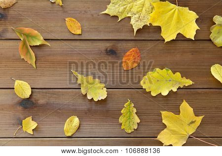 nature, season, autumn and botany concept - set of many different fallen autumn leaves on wooden board