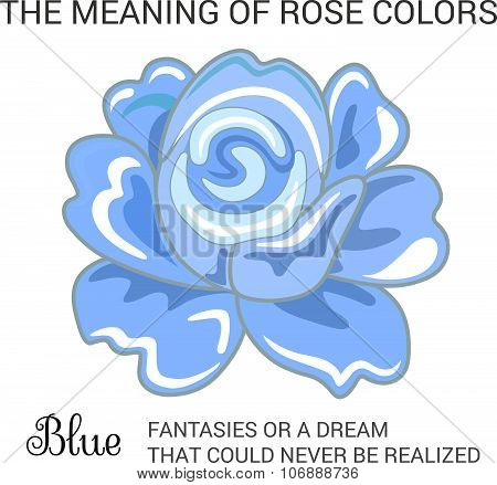 Blue rose infographics