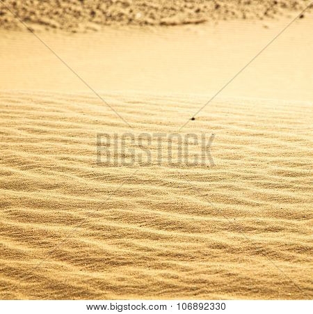 Brown Dry Sand In  Morocco Africa Erosion And Abstract