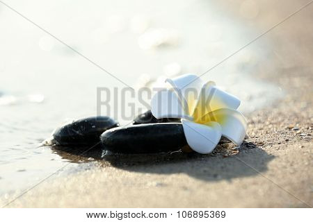 Pebbles with plumeria on seashore