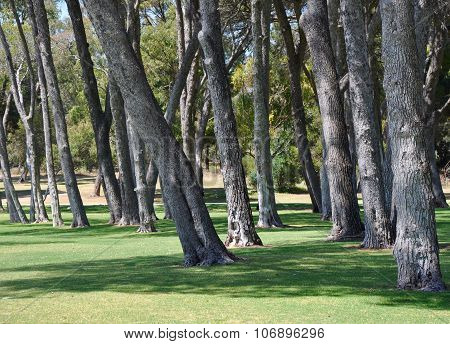 Tall Tree Trunk Landscape