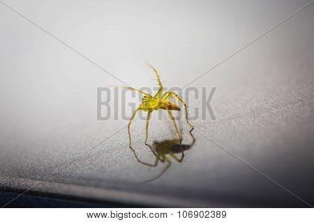 Mini Green Spider.